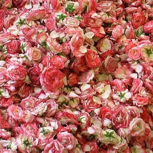 Oily rose - one of the ingredients