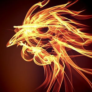 Welcome the year of the Fire Rooster